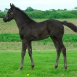 Thoroughbred filly born 4/4/11 | Sire: Category Five | Dam: Glorinda | Owner: Wind N Wood Farm
