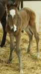 Thoroughbred Colt Foaled 2/27/09 | Sire: Military | Dam: Masquerade Star | Owner: Dr. Joel Zamzow
