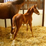 Thoroughbred filly born 4/8/11 | Sire: Demidoff | Dam: Santa Fe Queen | Owner: Edgar Smith