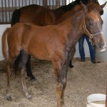 Thoroughbred Filly Foaled 3/19/09 | Sire: Demidoff | Dam: Shersdanzing | Owner: Darrell Lewis