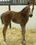 Thoroughbred Filly Foaled 3/5/09 | Sire: Cape Town | Dam: Stormin Beeber | Owner: Darrell Lewis
