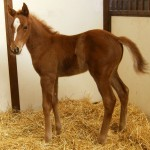 Thoroughbred Colt Foaled 2/27/09 | Sire: Lucky Lionel | Dam: Treacherous Tide | Owner: Barb Rehbein