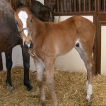 Thoroughbred Colt Foaled 4/19/09 | Sire: Even The Score | Dam: Tulip Creek | Owner: Wind N Wood Farm
