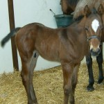 Thoroughbred Colt Foaled 5/5/09 | Sire: Sunday Break | Dam: Victorious Vicki | Owner: Jeff Drown