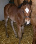 Quarter Horse Filly Foaled 3/23/09 | Sire: Firewater on Ice | Dam: Wheelin Payday | Owner: Lori Witz