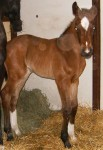 Warmblood Filly Foaled 4/13/09 | Dam: Willow | Owner: Val Vetos