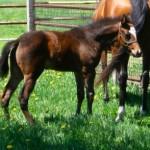 Wind N Wood foal