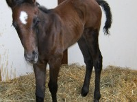 QH filly born 4/12/12 / Sire: Royal Shakem / Dam: BL Forty / Owner: Kim Christiensen