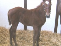 Thoroughbred colt born 2/3/13.  Sire: Paddy O'Prado   Dam: Annacious   Owner: Prairie Hill Farm, Jim Thares