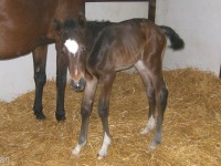 Thoroughbred filly born 5/8/13.  Sire: Catienus  Dam: Sparkling Blue  Owner: Dale Borchers
