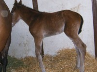 Thoroughbred colt born 4/20/13. Sire: Flower Alley Dam: Tisourturn Owner: Dale Borchers