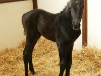 Thoroughbred filly born 4/20/13.  Sire: Matts Broken Vow  Dam: Wa Sarah  Owner: Eric & Mary Von Seggern