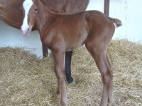 Quarter Horse filly born 5/5/14 Sire: Pool Dam: Sparkling Blue (TB) Owner: Dale Borchers
