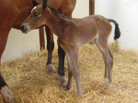 Oldenberg filly born 6/2/14 Sire: Papillion Dam: Thelma Owner: Susan Thomas