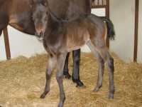 Thoroughbred filly born 4/8/14 Sire: Stephen Got Even Dam: Vicar's Daughter Owner: Gary Bergsrud