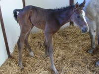 Thoroughbred Colt born 4/27/15 Sire: Eastwood D'Cat Dam: Blue Gene Song Owner: Eric & Mary Von Seggern