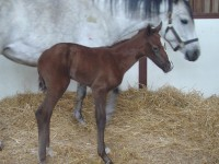 Quarter Horse Filly born 4/21/15 Sire: Allocate Your Assets Dam: Only Blue Miracles Owner: Julianna Hornick