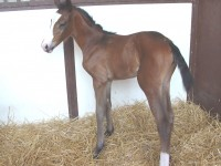 Warmblood filly born 5/26/15 Sire: Bliss MF Dam: Peri Owner: Kim Barone
