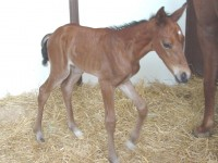 Warmblood filly born 6/9/15 Sire: Gallarius Dam: Prima Owner: Susan Thomas