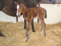 Thoroughbred Filly born 3/3/15 Sire: Colonel John Dam: Run Like Rachel Owner: Black Oaks Farm
