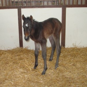 Paint Filly born 4/8/15 Sire: Krymsun Kruzer Dam: TT Lady Te Bird Owner: Kari Berg