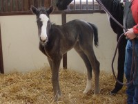 Thoroughbred filly born 2/6/15 Sire: I Want Revenge Dam: That Look Owner: Eric & Mary Von Seggern