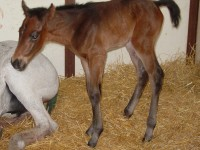 Thoroughbred Filly born 5/5/15 Sire: Shadow Hawk Dam: Wa Sarah Owner: Eric & Mary Von Seggern