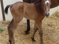 Thoroughbred Filly Born 4/22/16 Sire: Birdstone Dam: Champ Rasheda Owner: Mark Zamzow