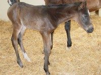 Thoroughbred Filly born 4/30/16 Sire: Giant Oak Dam: Holy Glory Owner: George Weir