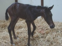 Thoroughbred Filly born 4/26/16 Sire: Stay Thirsty Dam: Imp's Wild Owner: Keith Westrup