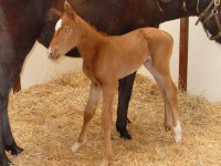 Thoroughbred Filly born 2/2/16 Sire: Misremembered Dam: Liffey River Owner: Windylea Farm