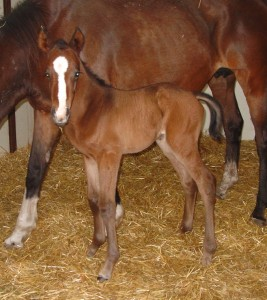 Thoroughbred Colt born 4/27/16 Sire: Discreet Cat Dam: Oolala Owner: Mark Zamzow