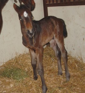 Thoroughbred Colt born 3/26/16 Sire: Kela Dam: Sparkling Blue Owner: Dale Borchers