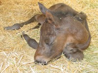Thoroughbred Colt Born 3/6/16 Sire: Belamy Road Dam: Holy Cow She's Sassy Owner: George Weir III