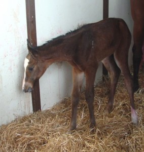 Thoroughbred Filly born 3/14/17 Sire: Timber Legent Dam: Award Owner: Pat Crawley