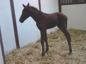 Thoroughbred Colt Born 5/6/17 Sire: Paddy O'Prado Dam: Imp's Wild Owner Keith Westrup