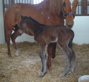 Thoroughbred Filly born 3/10/17 Sire: Americain Dam: Sarie Marais Owner: Joel Zamzow