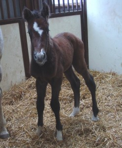 Thoroughbred Filly born 3/22/18 Sire: Wilburn Dam: Blue Gene Song Owner: Eric & Mary Von Seggern