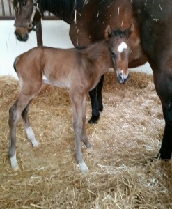 Thoroughbred Filly born 4/9/18 Sire: Smarty Jones Dam: Holy Glory Owner: George Weir