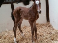 Thoroughbred Colt born 4/10/18 Sire: Bayern Dam: Loving Lorraine Owner: Lothenbach Stables, Inc.