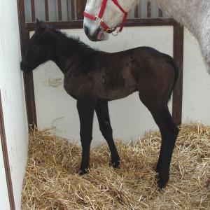 Quarter Horse Filly born 3/8/18 Sire: Separate Interest Dam: Whereshesupposetobe Owner: Terry Reed